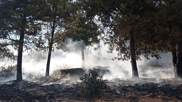 Adanada çıkan orman yangını kontrol altına alındı
