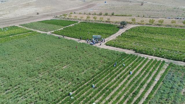 Elazığda yıllık 80 bin ton sebze üretimi ile ekonomiye katkı sağlanıyor
