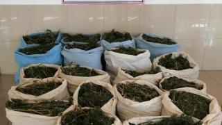 Bingöl'de 289 kilogram esrar ele geçirildi