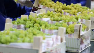 Yaş üzüm ihracatında yüzde 22 artış