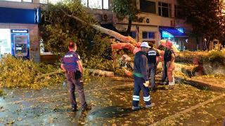 Beykoz'da devrilen ağaçtan kıl payı kurtuldular