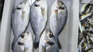 Denizlerdeki balık bolluğu Tekirdağ'da tezgahlarda çeşitliliği arttırdı