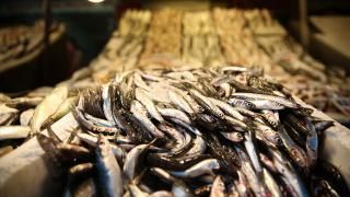 Mersinli balıkçıların bekeretli avı tezgahları şenlendirdi