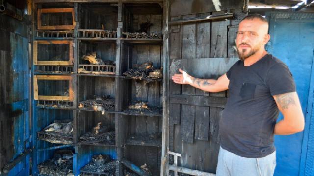 Mersinde güvercin kümesinde yangın: 39 kuş telef oldu
