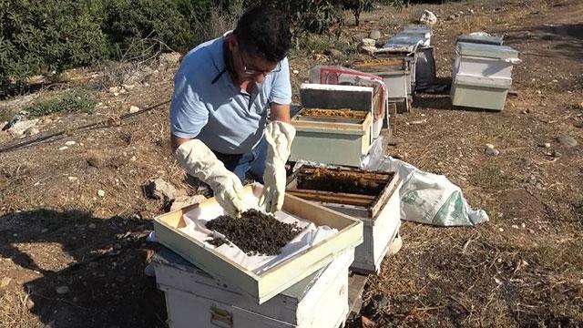 Mersinde 1 milyon 200 bin arı telef oldu
