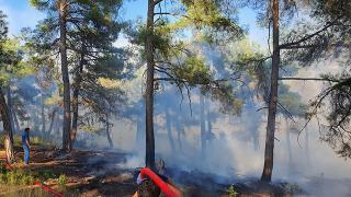 Tarsus'ta çıkan orman yangını kontrol altında