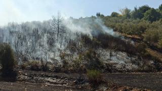 Osmaniye'de orman yangını çıktı
