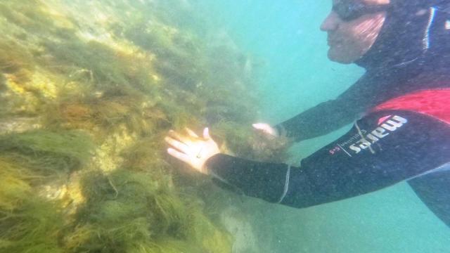Altınova Belediye Başkanı Oral, tarihi Kibatos Kalesi su altı kazı çalışmasını inceledi