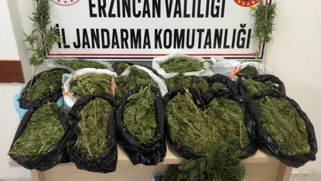 Erzincanda çatısında uyuşturucu yetiştirdiği iddia edilen zanlı tutuklandı
