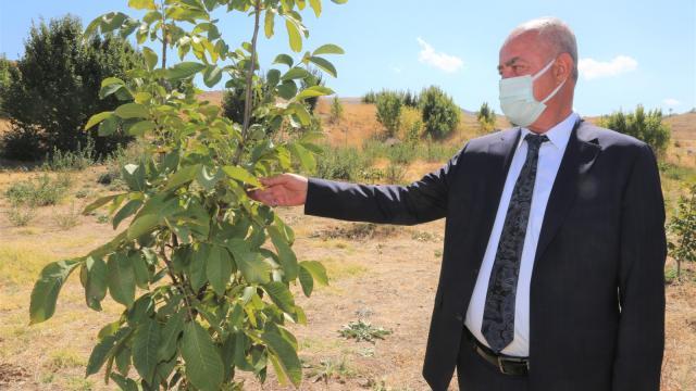 Tuşba Belediyesinin destekleriyle oluşturulan ceviz ve badem bahçelerinde ilk hasat başladı