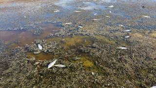 Beyşehir Gölü kenarındaki sulak alan kurudu, yüzlerce balık telef oldu