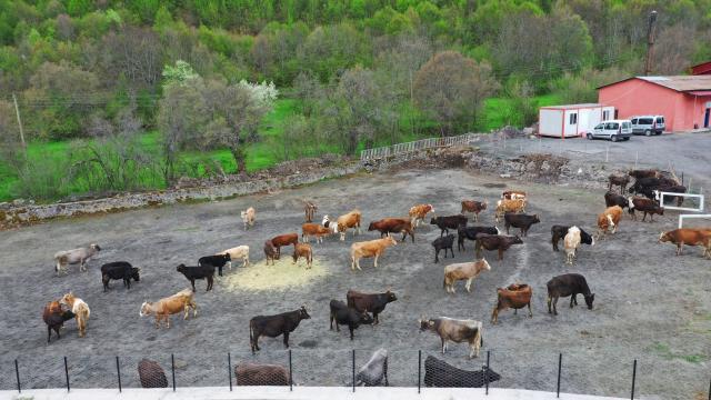 Orduda hizmet veren hayvan oteli, üreticilerin imdadına yetişiyor