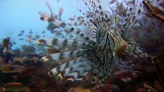 Denizlerdeki tehlike: İstilacı türler