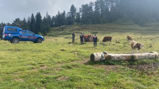 Kastamonu'da jandarma kaybolan hayvanları bularak sahibine teslim etti