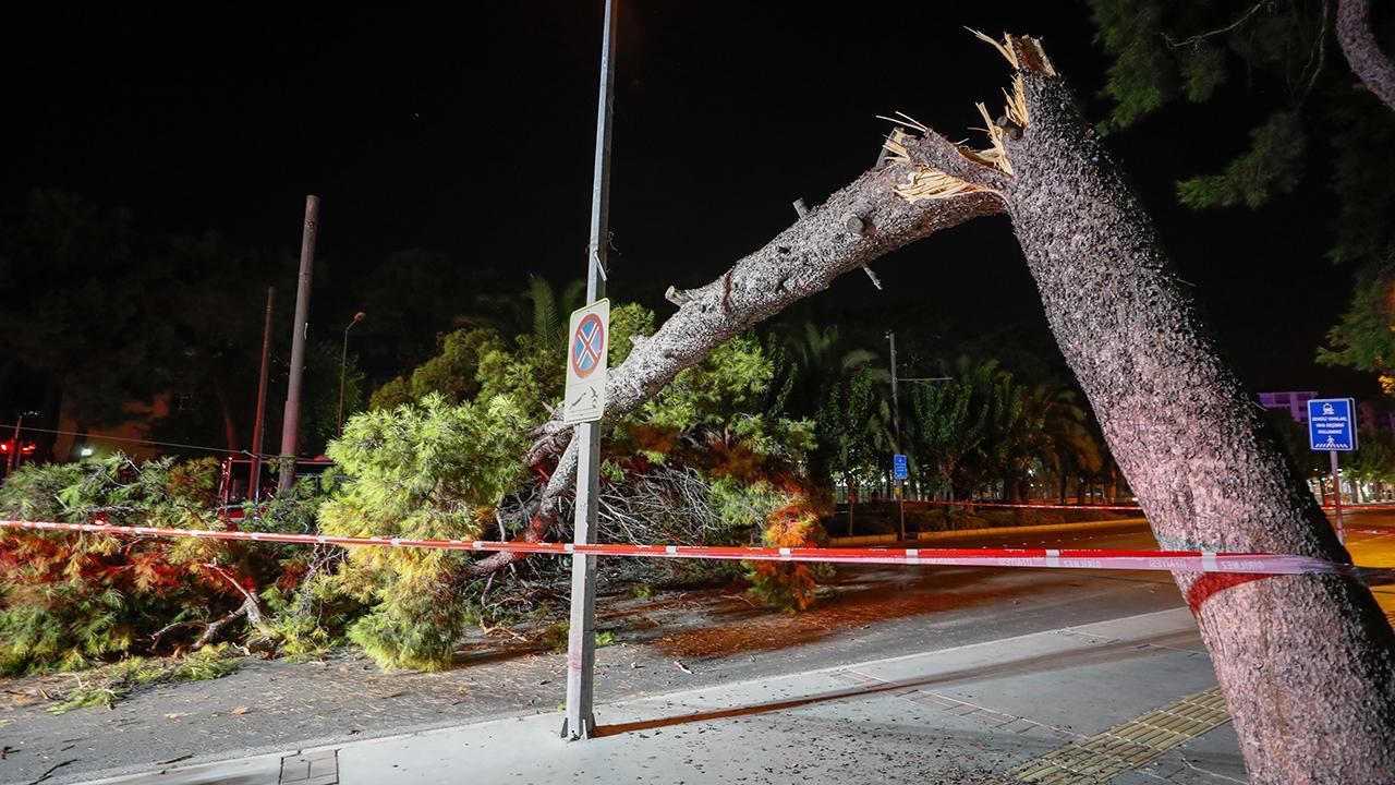 İzmir'de ağaç devrildi: Tramvay seferleri durdu