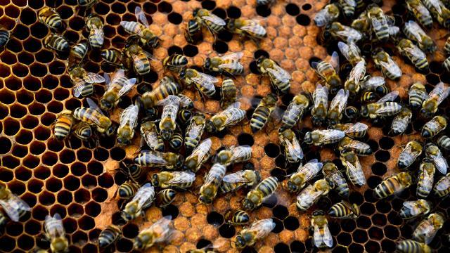 Arı ürünleri kemoterapinin yan etkilerini azaltıyor