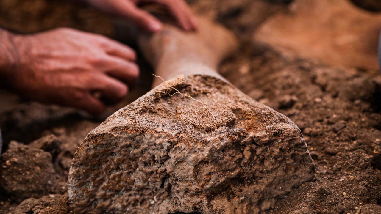 Gavur Gölü'nde bulunan fil fosilleri inceleniyor