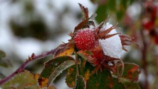 Kars'tan kar ve sonbahar renkleri