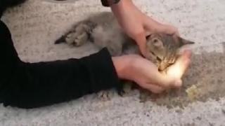 İtfaiyeden kalbi duran kediye hayati dokunuş