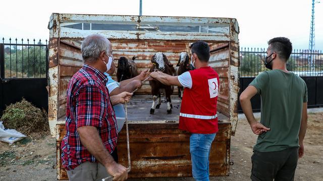 Türk Kızılaydan Manavgatta küçükbaş hayvan yardımı