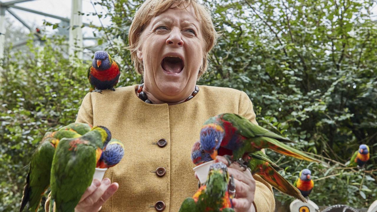 Merkel'in kuşlarla imtihanı