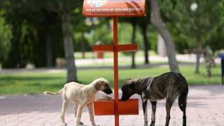 Kocasinan Belediyesi sokak hayvanlarını haftada 5 kez 70 noktada besliyor
