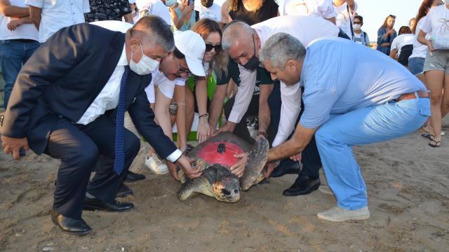 Antalyada 4 caretta caretta denize bırakıldı