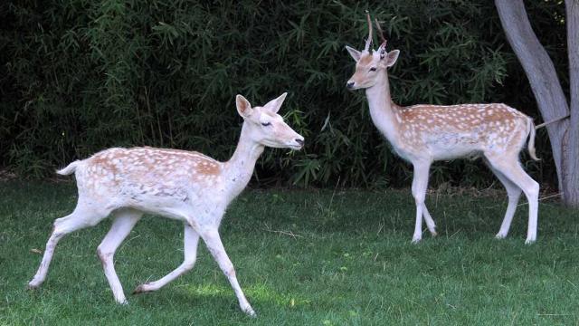 Kırşehir evcil hayvanlar parkı yeni sakinleriyle ilgi görüyor