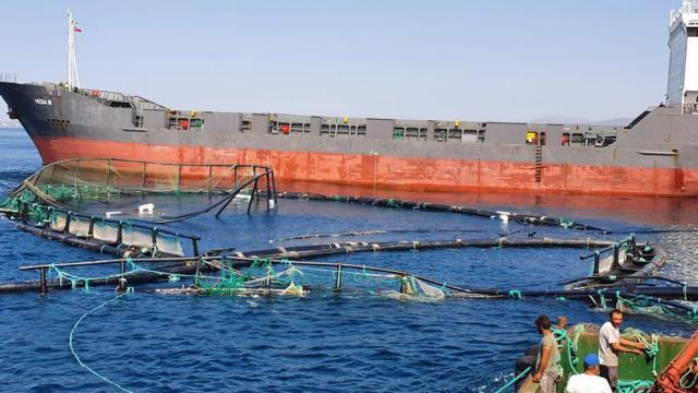 Çiftlik havuzundaki 20 milyon liralık balık denize kaçtı