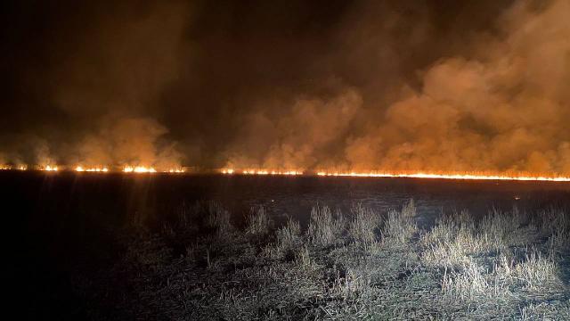 Afyonkarahisarda sazlık yangını