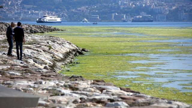 İzmirde deniz yeşile büründü