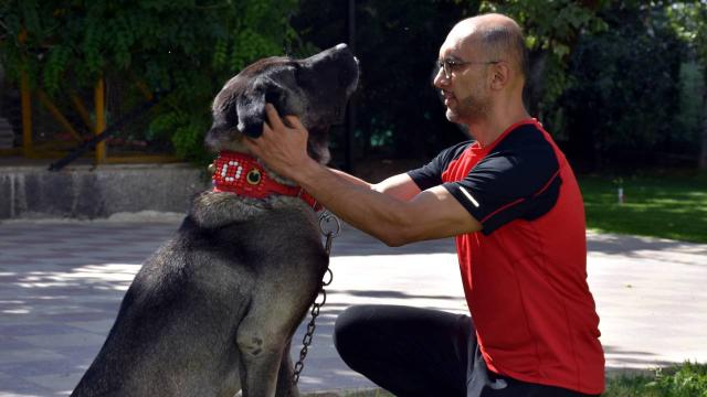 Hayvansever profesörden sokak hayvanlarına şefkat eli