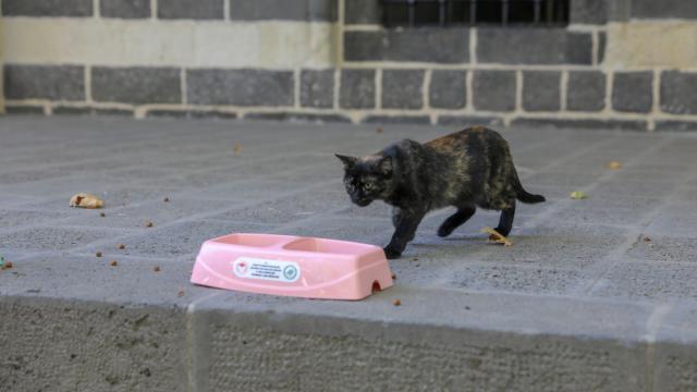 Diyarbakırın Sur ilçesinde hayvanlar için sokaklara mama bırakıldı