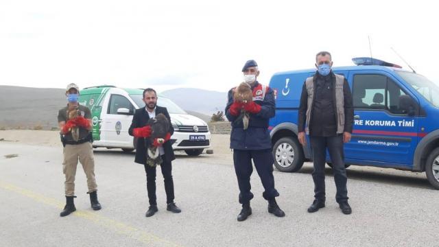 Erzurumda tedavi edilen 2 kızıl şahin ve kaya kartalı doğaya salındı