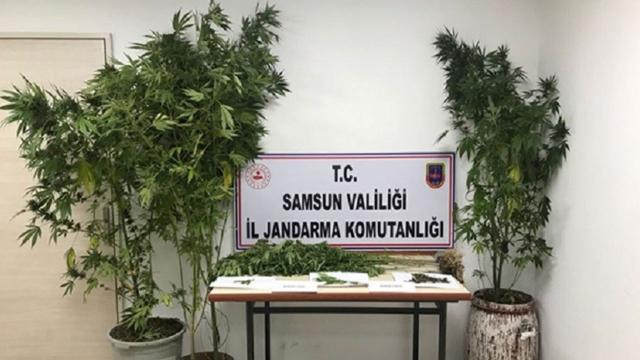 Samsunda uyuşturucu operasyonları: 15 gözaltı