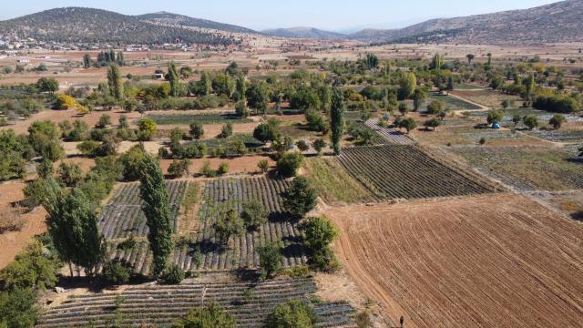 Konyada bin 150 nüfuslu mahallenin kaderi organik çilekle değişti