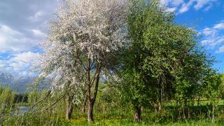 Mevsimler kayboluyor, geride birçok olumsuzluk bırakıyor