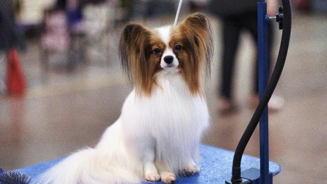 Araştırma: Köpekler dilimizi öğreniyor