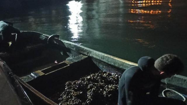 İzmit Körfezinde yasa dışı avlanan midyeler denize bırakıldı
