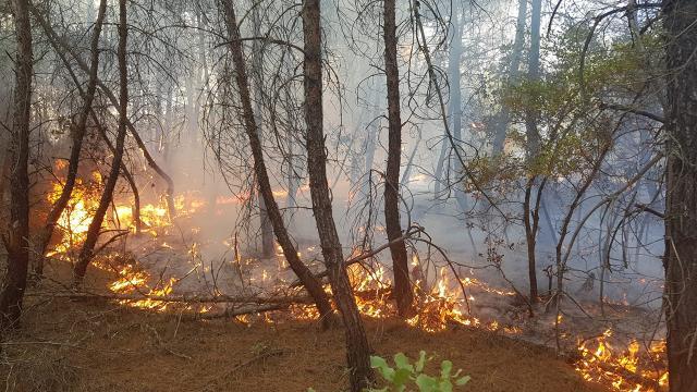 Kütahyadaki orman yangını kontrol altında