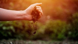Gezegenimizin yaşayan ve yaşatan derisi tehdit altında