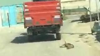 Traktörün römorkuna bağladığı köpeği metrelerce sürükledi