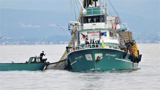 600 ton hamsi saatler içinde yakalandı