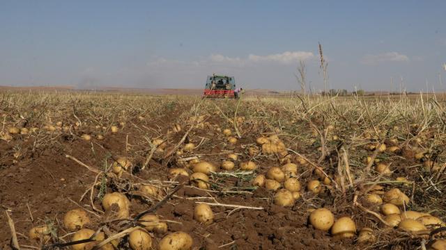 Yozgatta patates hasat edildi