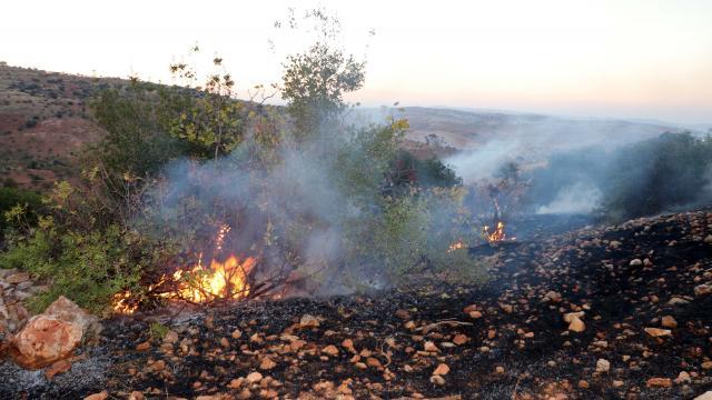 Gaziantepte çıkan yangında 50 dönüm alandaki ağaç zarar gördü