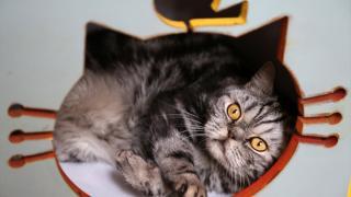 Tahran'daki 'Kedi Müzesi' insanların kedilerle bağını güçlendiriyor