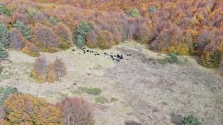 Kütahya'da kaybolan küçükbaş hayvan sürüsü bulundu