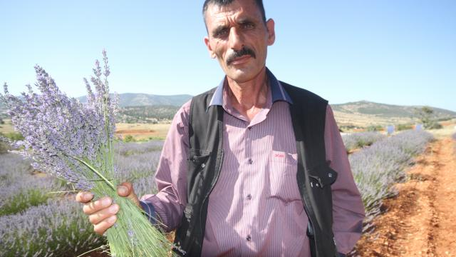 Konyanın organik çilek üretim merkezi Hüyükte lavanta üretimi yaygınlaşıyor