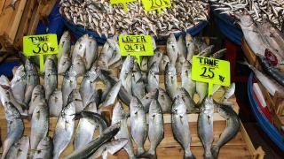 Lüfer bolluğu balıkçıların yüzünü güldürdü