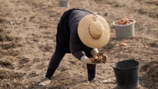 Portekiz'de '15 Ekim Dünya Kadın Çiftçiler Günü'
